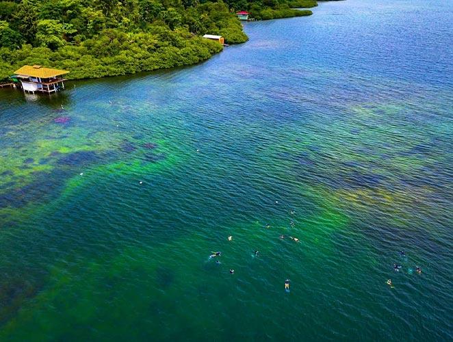 Snorkeling at Isla Solarte, Bocas del Toro